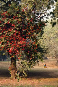 kvinnavidträd