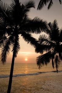 Palmvidhavet